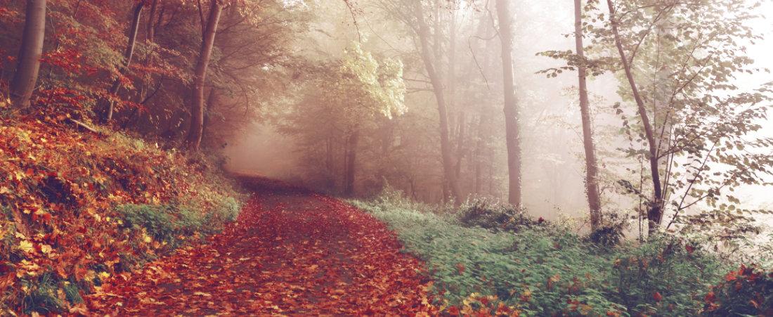 Una via autunnale di foglie